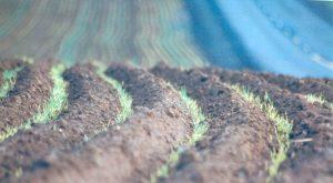 Deep Furrow Seeding