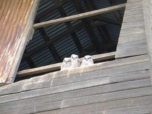 Sherman County Owls