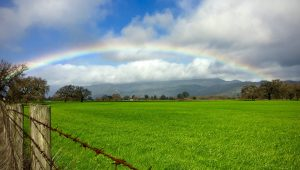 Rainbow over a Meadow