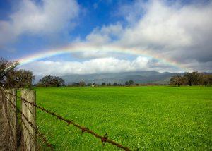 Rainbow over a Meadow