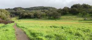 Montini Ranch Trail