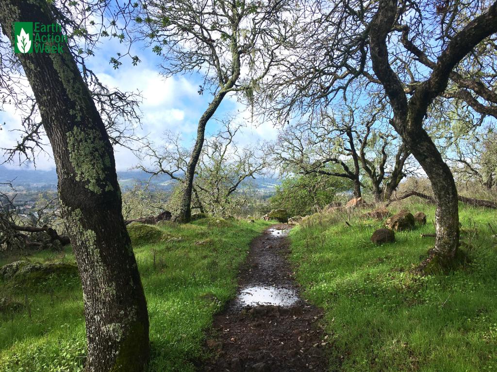"""""""Dreamlike Trail"""" by Julia L."""
