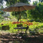 Scene from Sonoma Garden Park