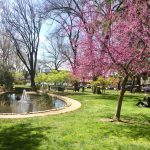 View of the Duck Pond in the Plaza Park