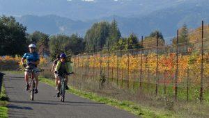Bike trail through vineyards