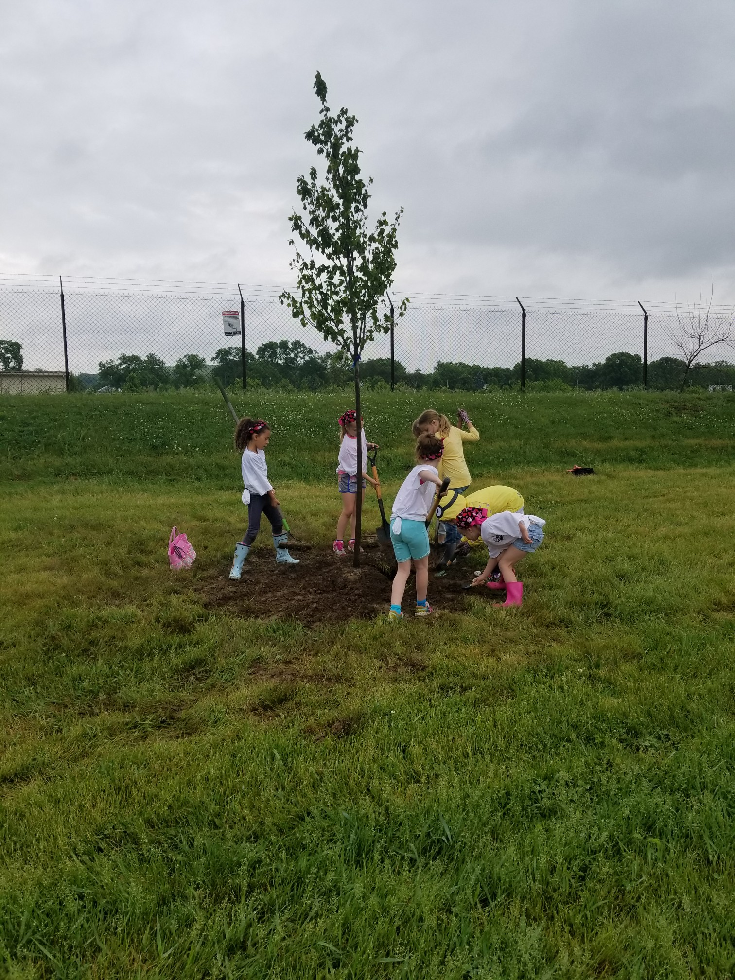 girl scouts plant tree