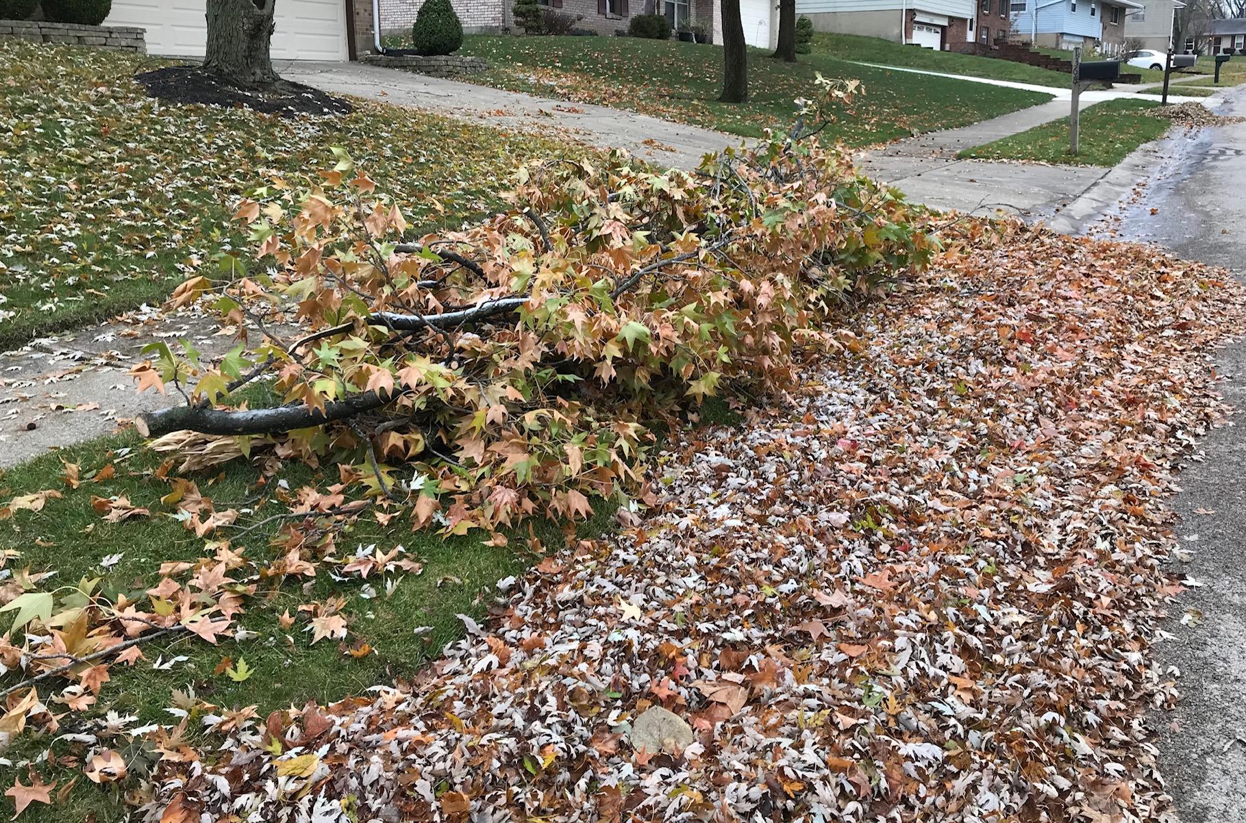 storm debris & leaves