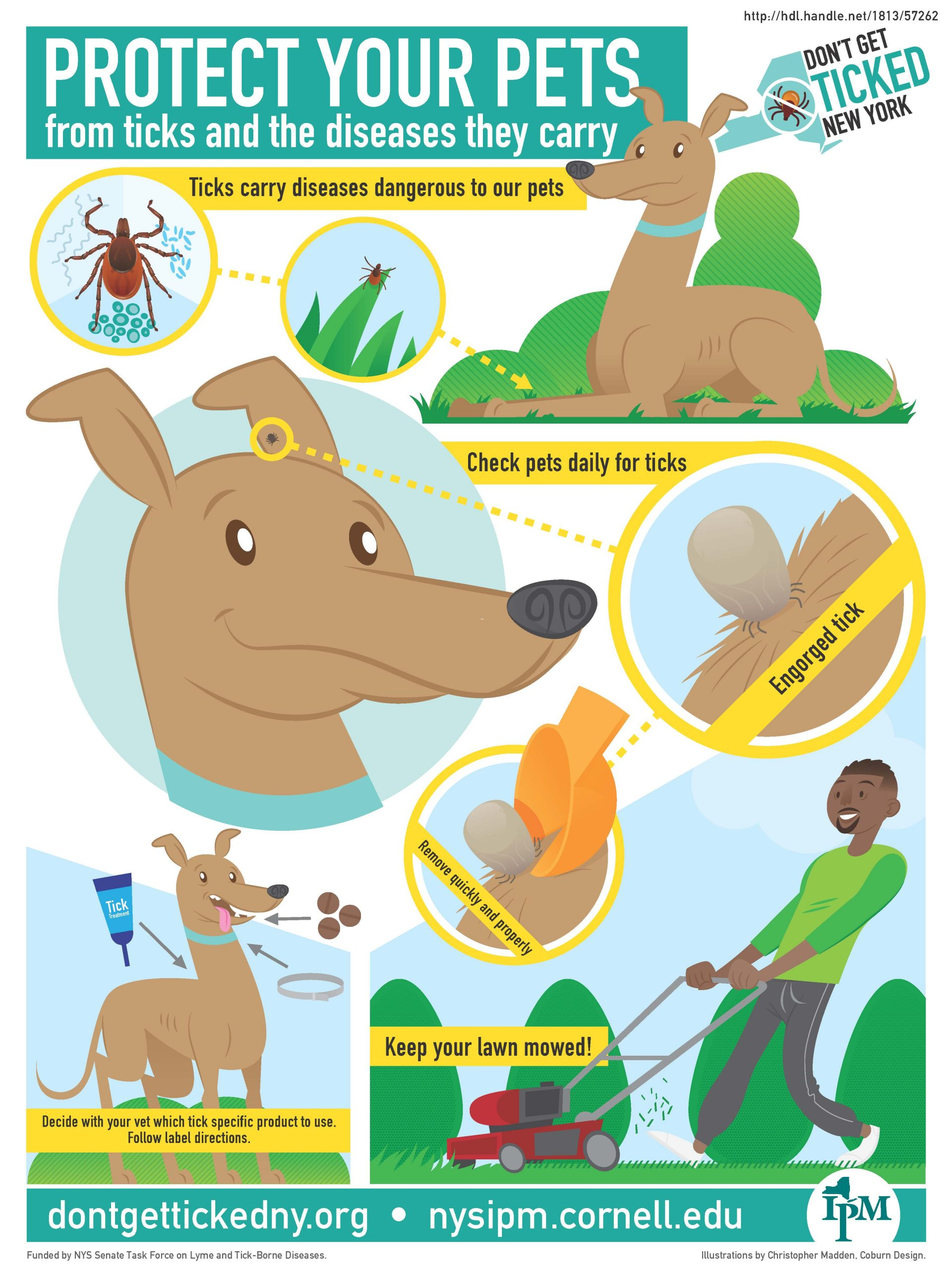 Infographic describing how to protect pets from ticks