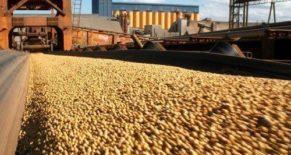 Soybean Br