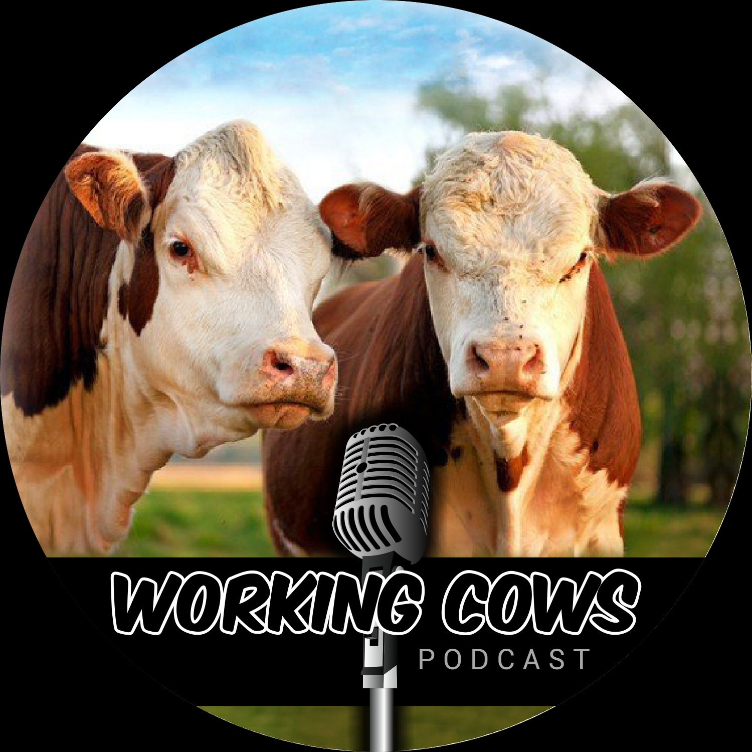 Working Cows Podcast Logo Square Black