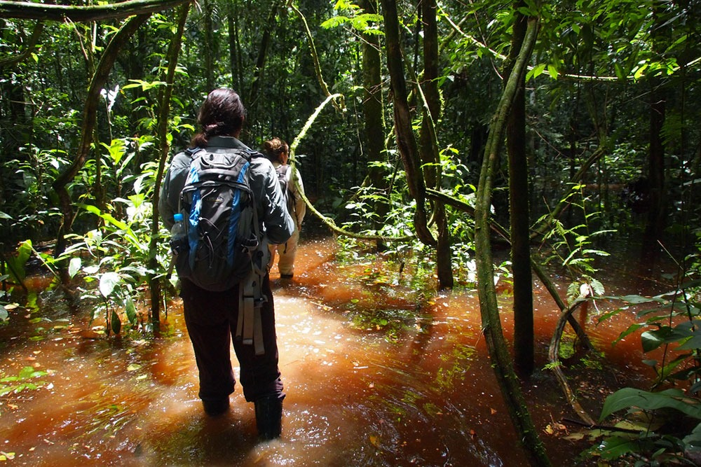 Tambopata Amazon