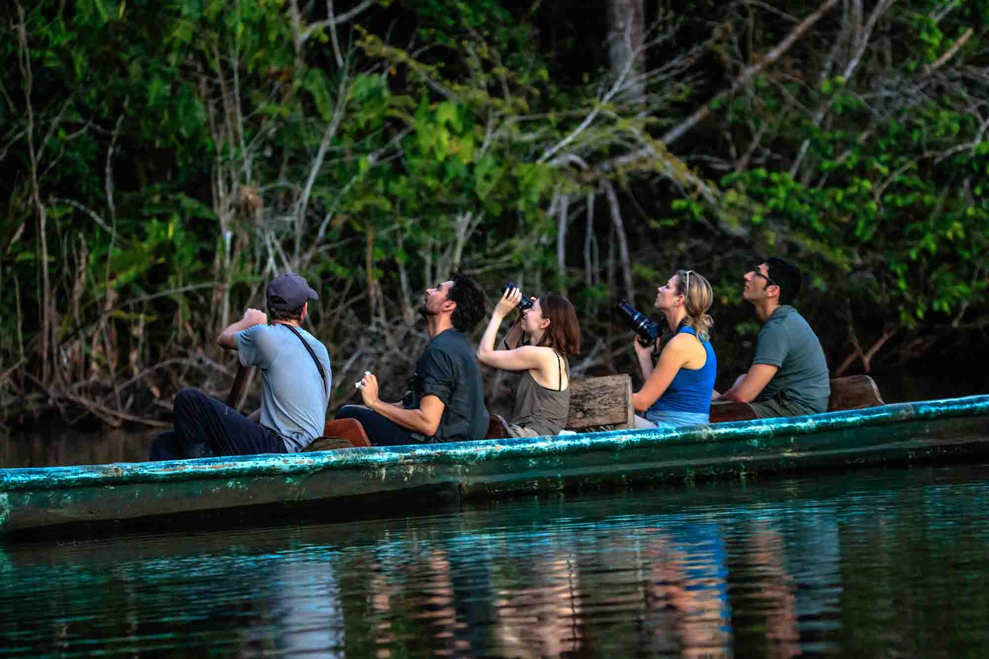 Jungle lodges
