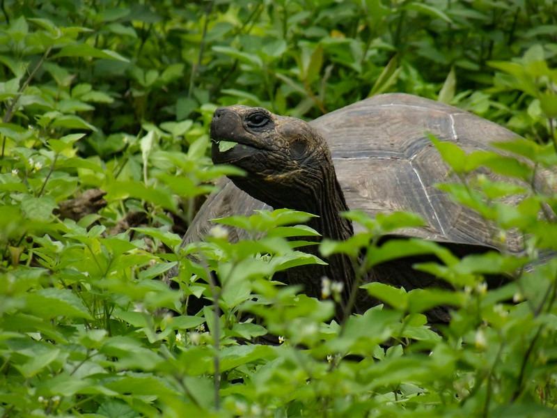 Galapagos Inseln - Flora