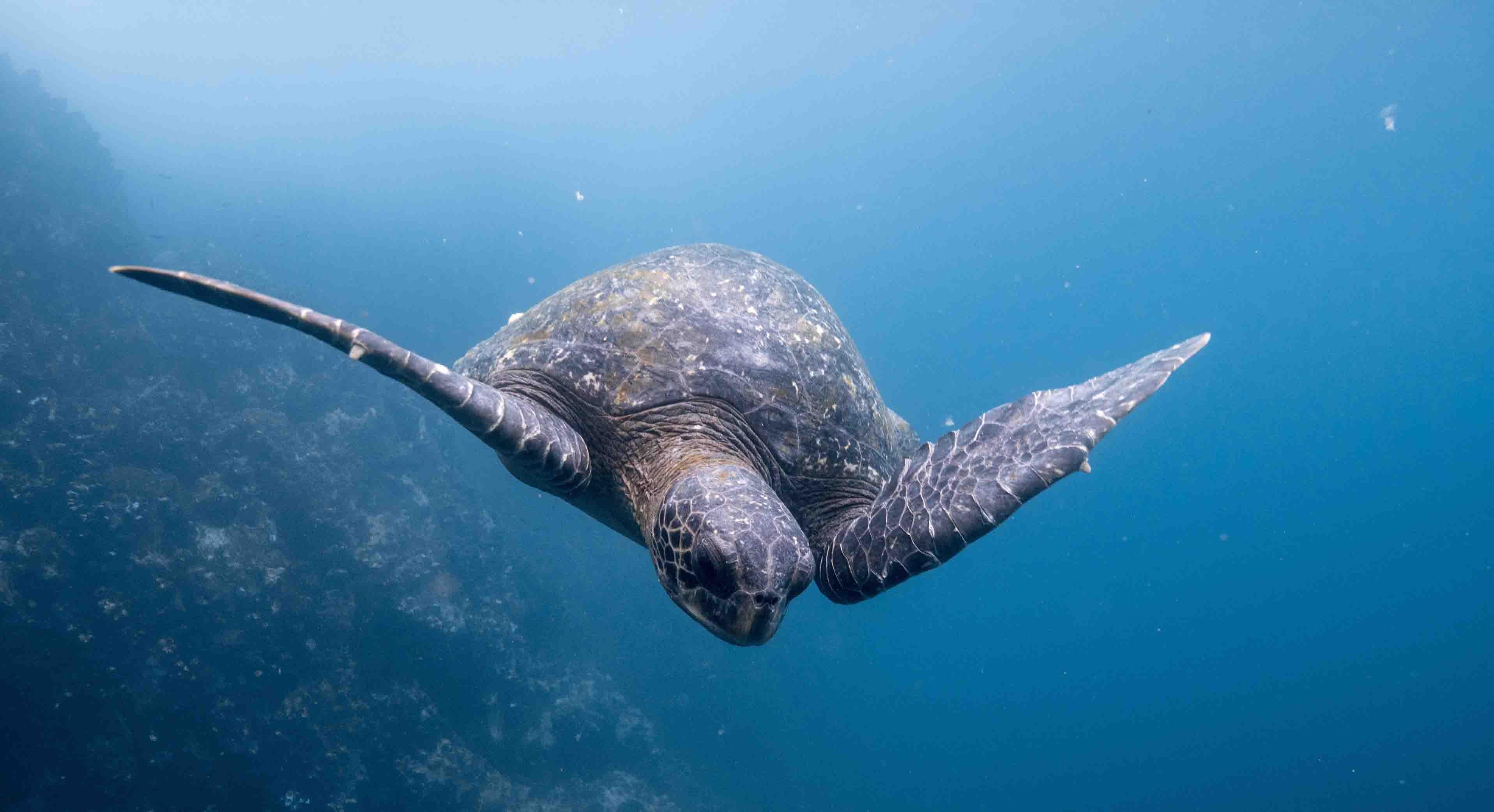 Galapagos Inseln Reiseplaner (Nach der Buchung)