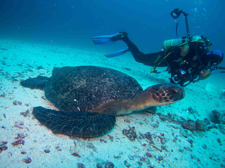 Hawksbill   Galapagos Islands