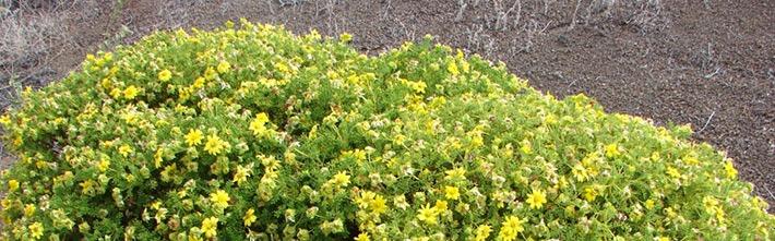 Weitere Trockenpflanzen