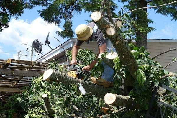 tree damage removal, storm tree damage, tree damage repairs, tree damage restoration, wind damage restoration, water damage restoration, storm damage restoration