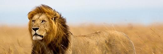 Legend Safari