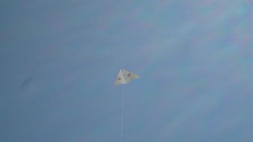 Kite Flying Tree