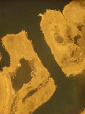 sx230_aerial_RICH.jpg