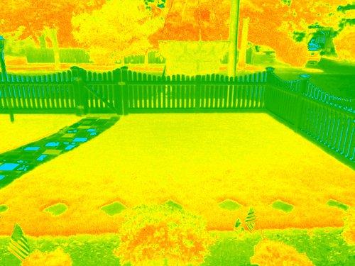 IMG_0956_NDVI_Color.jpg