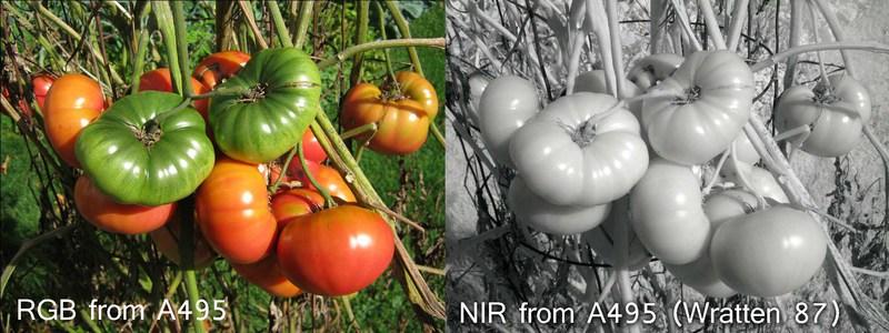 A495_RGB_NIR_2k.jpg