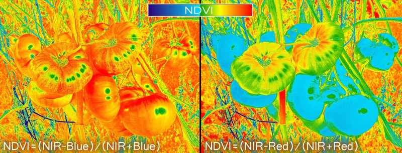 Red_Blue_NDVI_Color.jpg
