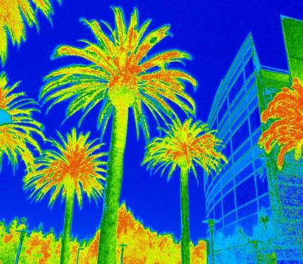 palms1NDVIps.jpg