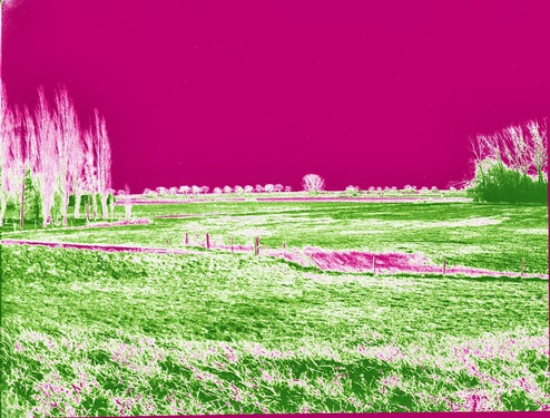CRW_0042_NDVI_Color.jpg