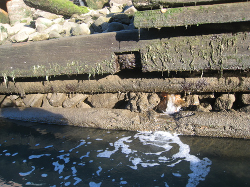 2014_7_17_Lightstone_Catkill_Spring__a_City_watermain_break_into_Gowanus_Canal_to_check_IMG_7838.JPG