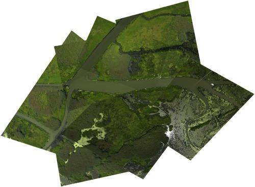411-wetland.jpg