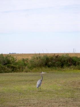 2014_11_14_Public_Lab_Barn_Raising_Cocodrie_Louisiana_Eymund_IMG_1502.JPG