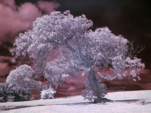 800px-Tree_example_IR.jpg