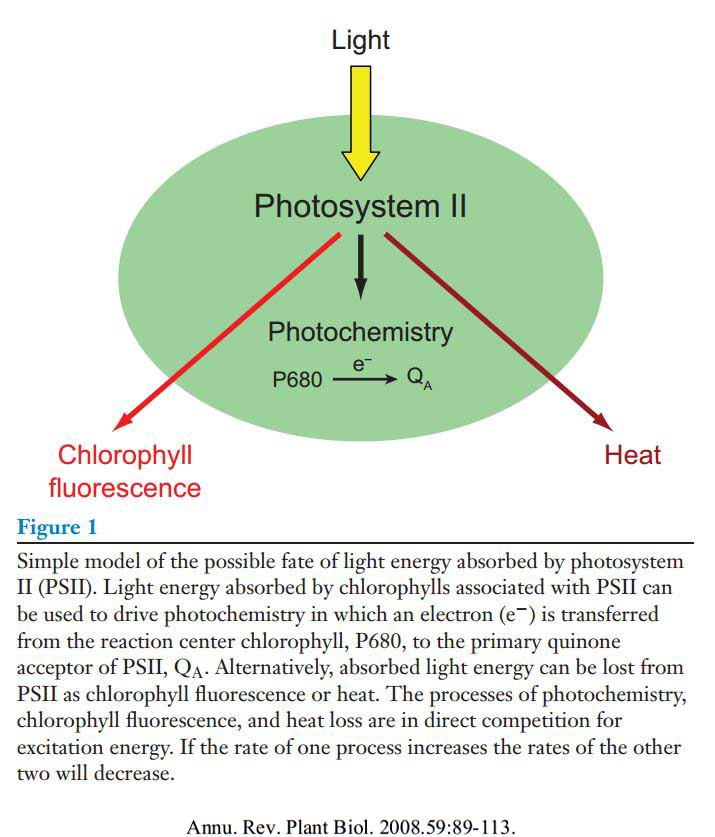 an analysis of photosynthesis in plants 2018-6-4 an analysis of plant structure leads to many questions:  we too are depending on the carbohydrates produced through photosynthesis, just like the plants.