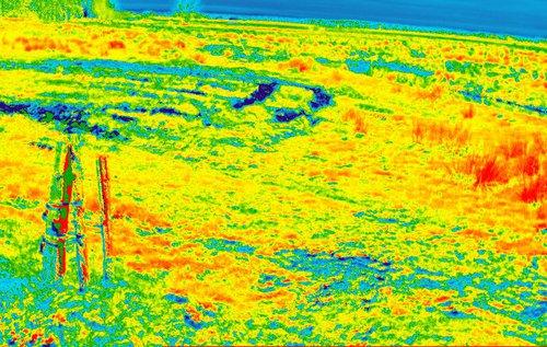 field_ndvi.jpg