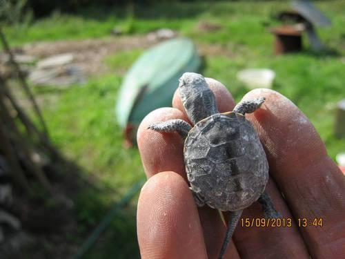 turtle_kid.JPG