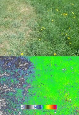 RGB_NDVIclover.jpg