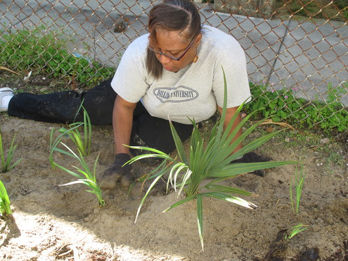 Angela_planting_rain_garden_(1).jpg