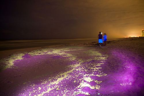 gulf-oil-spill-ultraviolet-light-glowing-scene_23069_600x450.jpg