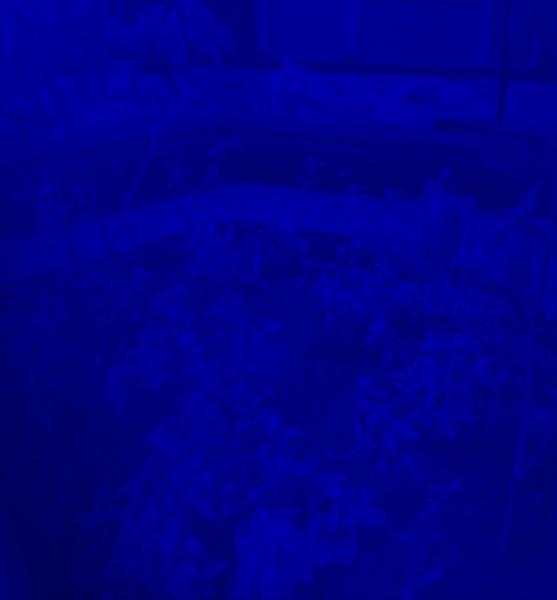 otd_im_Blue.jpg