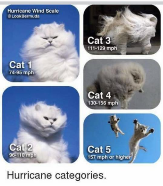 beaufort-scale-cats-version.png