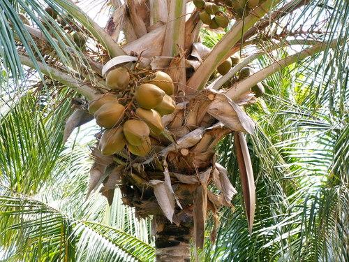 palm-tree2.jpg