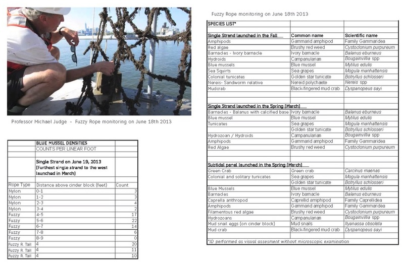 2014_species_found_on_Gowanus_mussel_nets_to_transfer_to_database_Kate_Orff.jpg