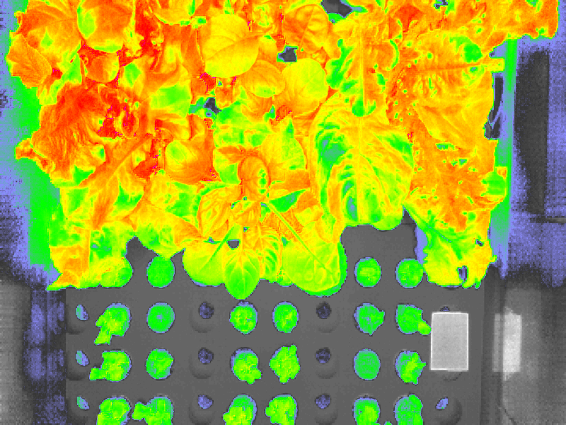 🎈 Public Lab: Low cost NDVI analysis using RaspberryPi and