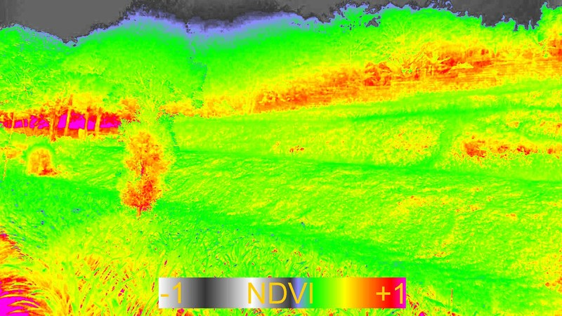 Picture84NDVI.jpg