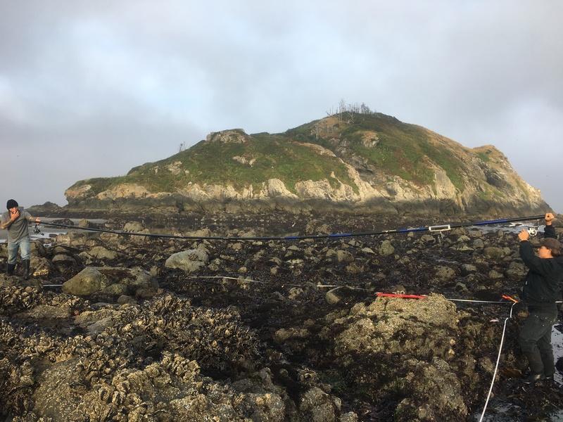 TIDES ecological survey