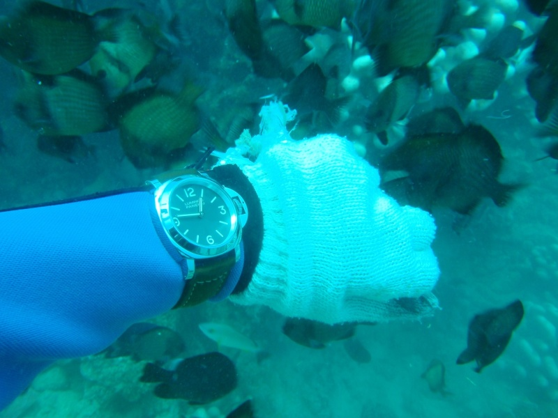 the shiny PAM390 attracts fish