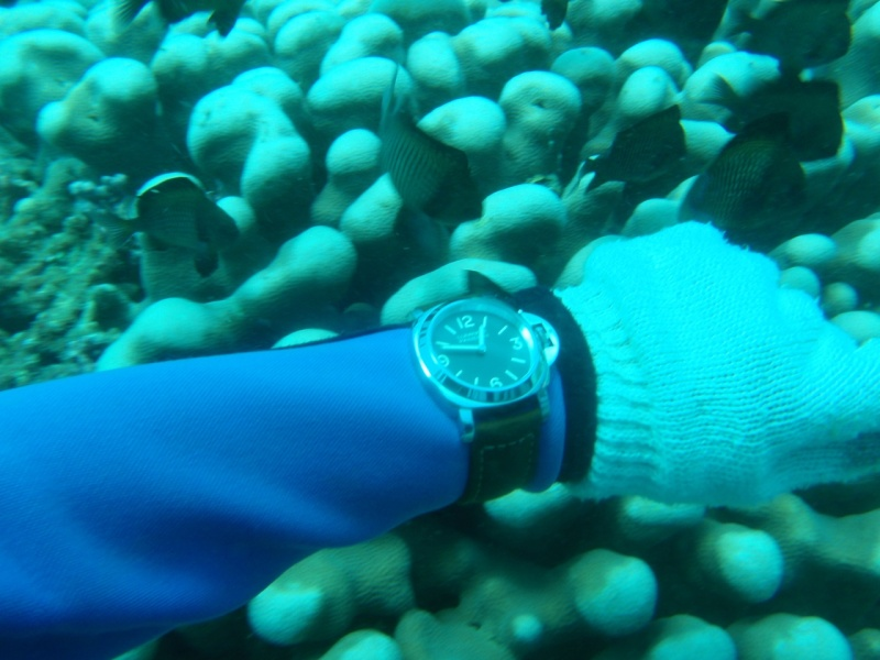 being super careful not to scratch my shiny watch against the coral