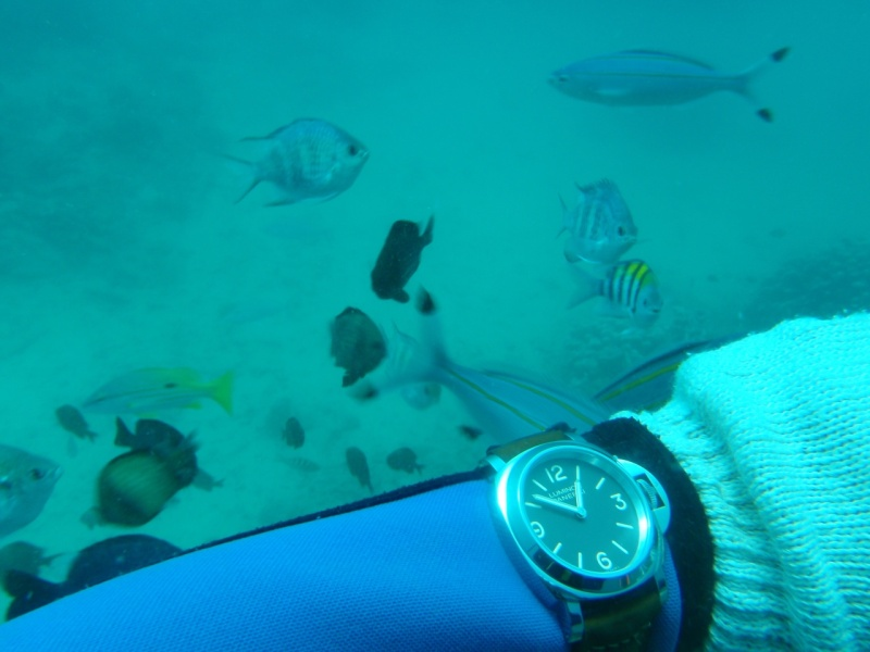 no dive bezel is better than the useless inner dive bezel on the AP Diver