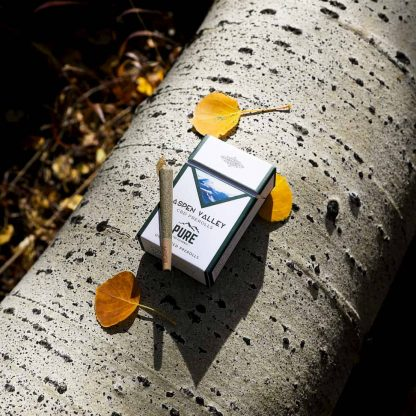 Pure CBD Exchange CBD Hemp Joints sitting on a tree.